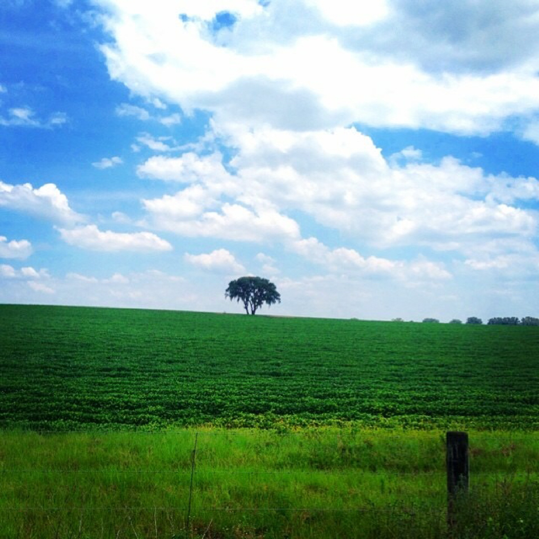 Lonely Ocala Tree by CasualPhotographer71