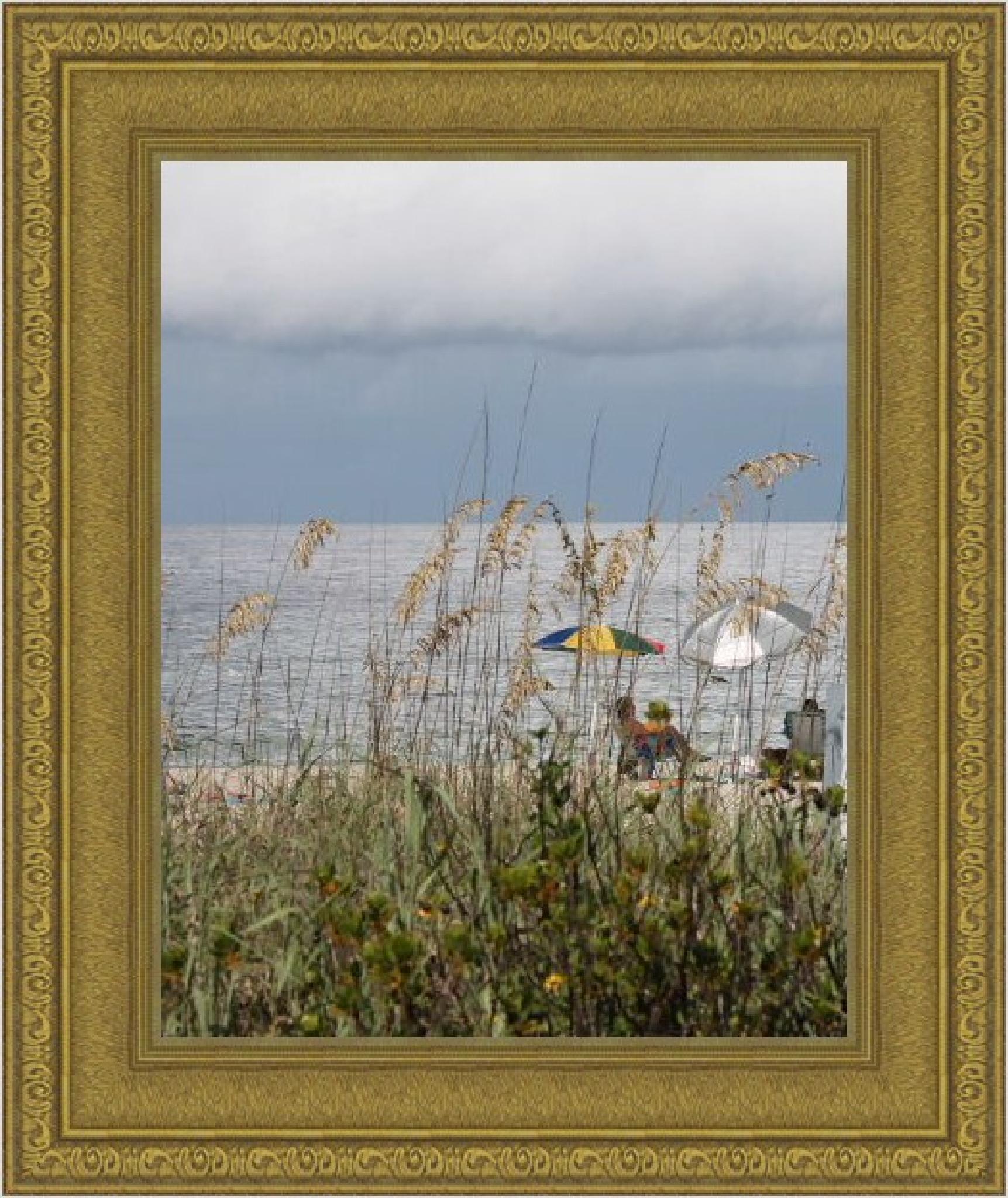 Venice, Florida  by JUDITH HORN
