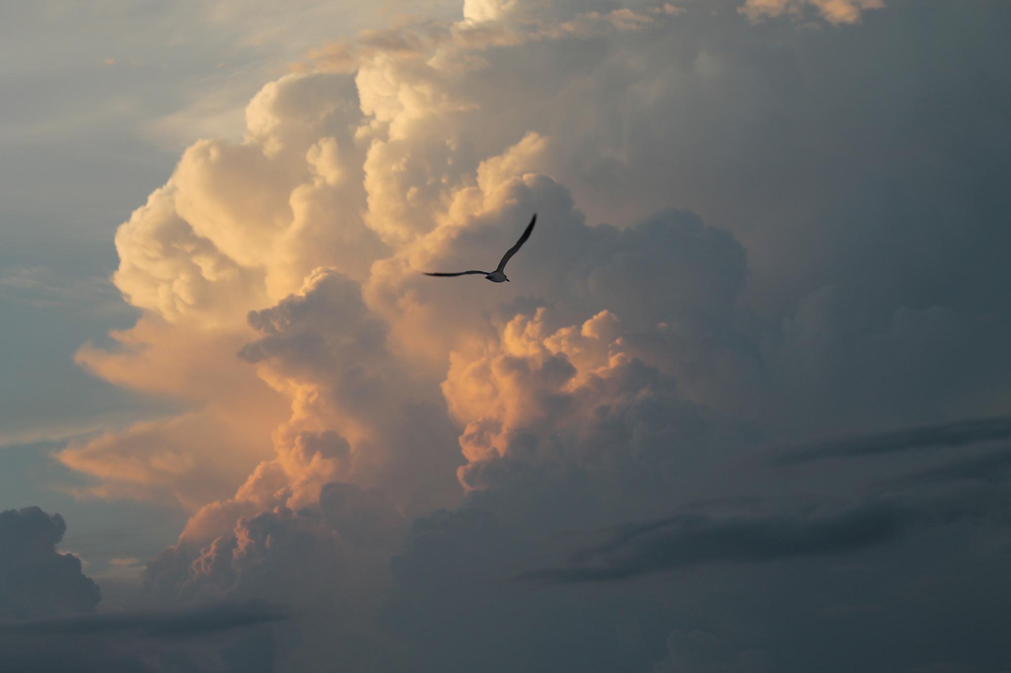 sky over Sarasota  by JUDITH HORN