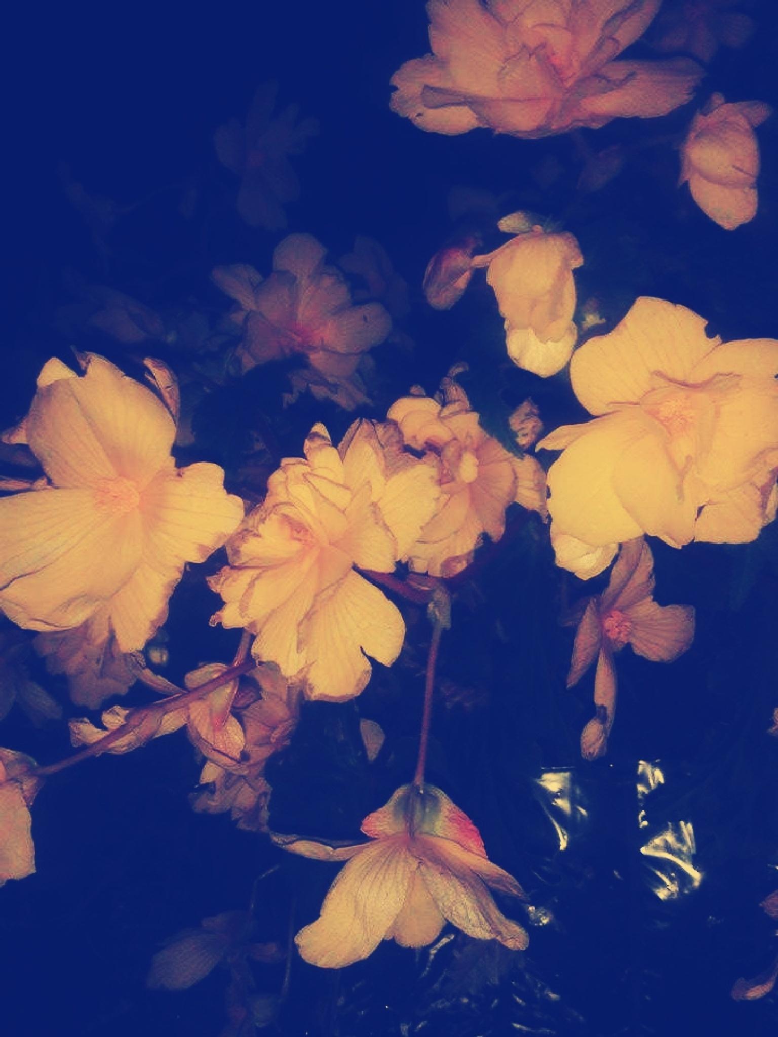 Drooping Yellows by Samantha Rose