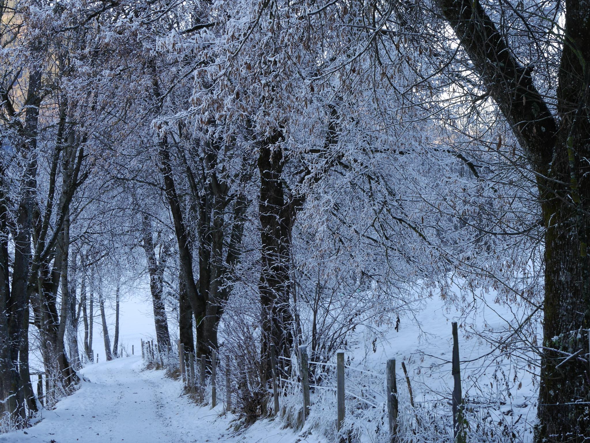 Winter Path by Stuart51