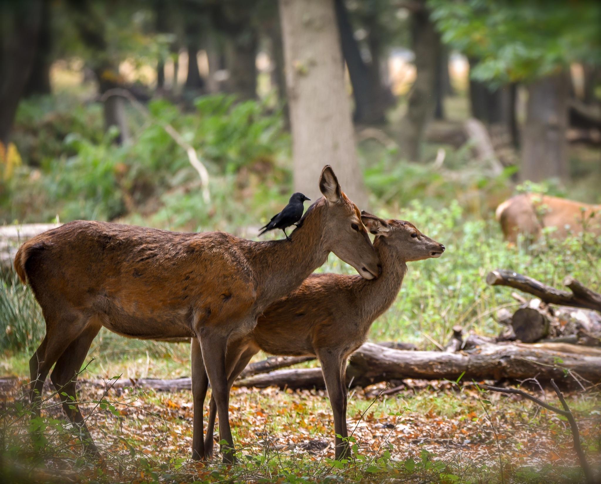 Two's company, three's a crowd! by Nikkiad