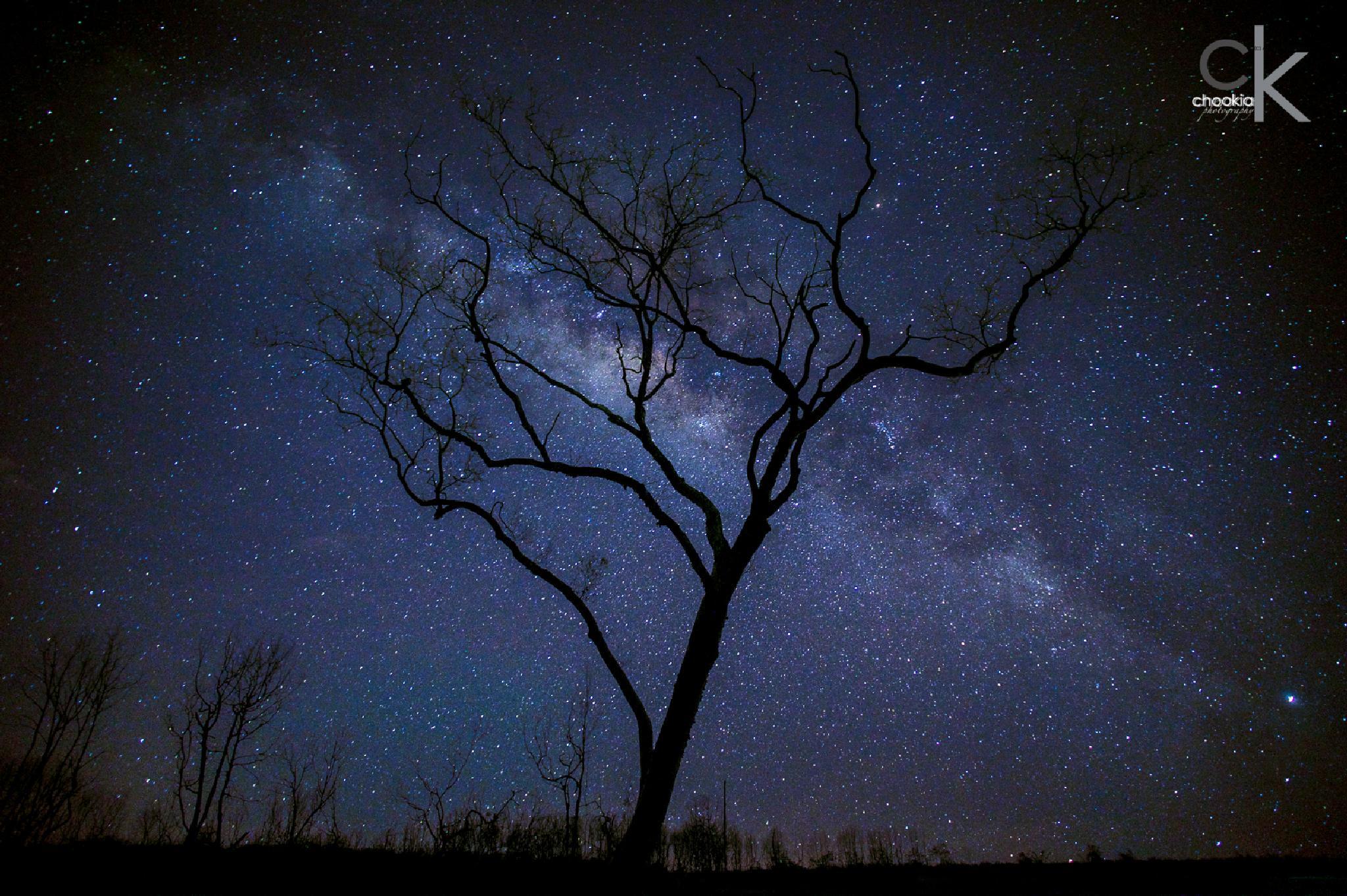Milky-Way @ Kuala Gula by chookia