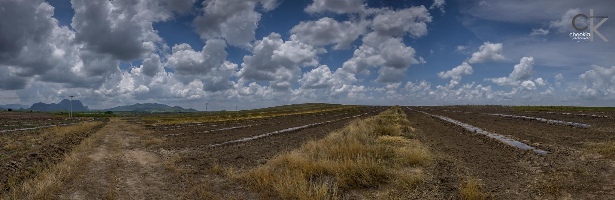 Panorama  by chookia
