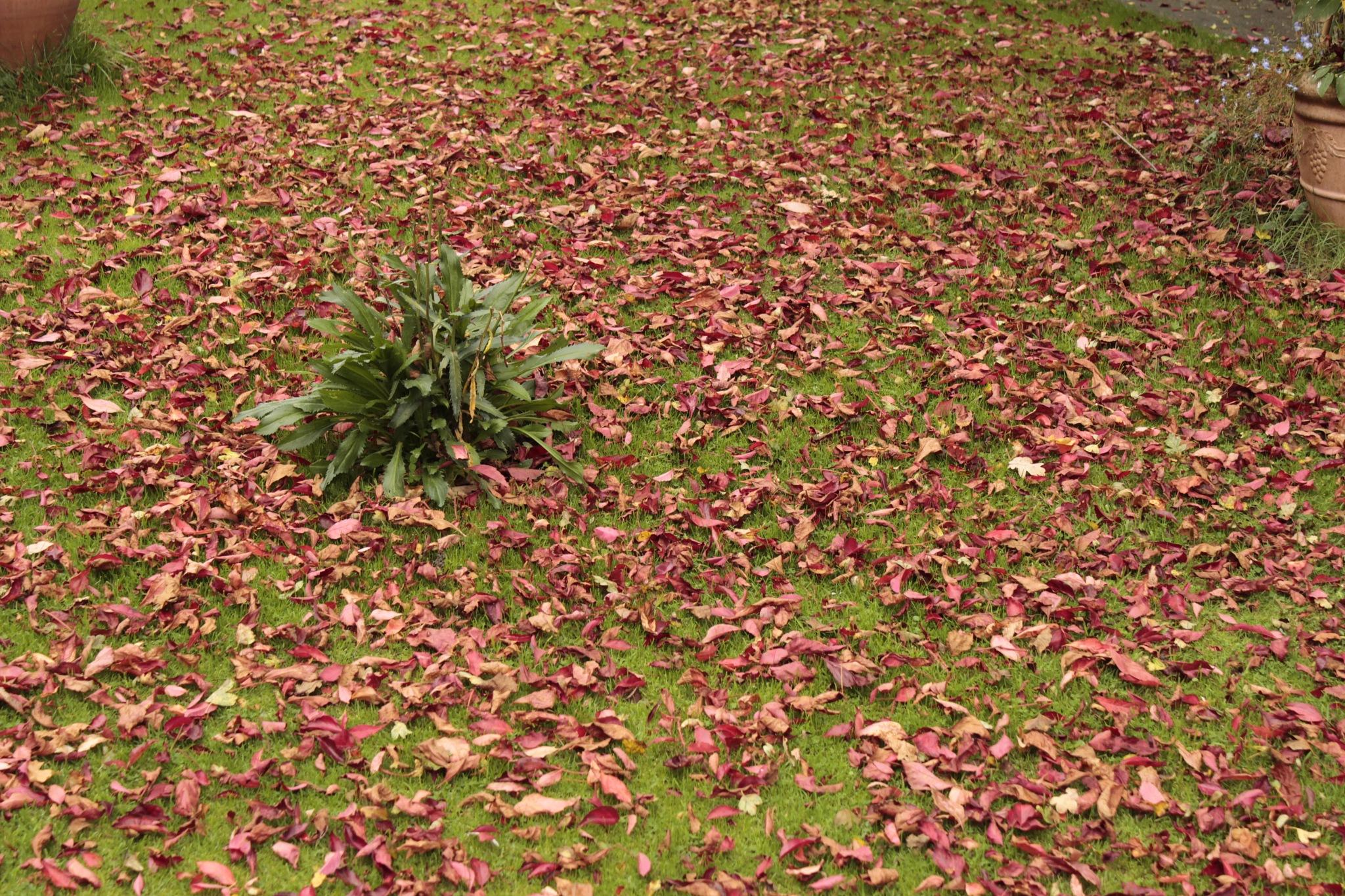 Autum leaves by yrref
