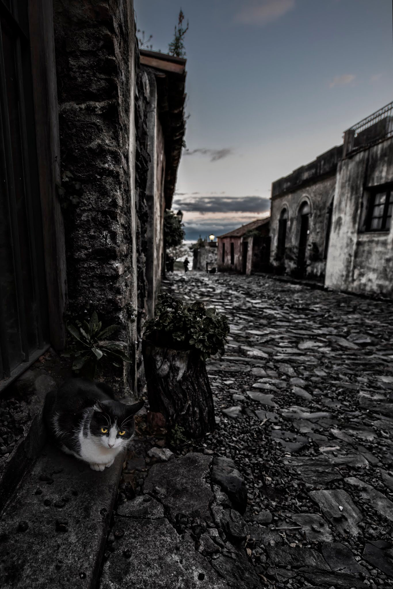 Cat by Xime Cesaratto