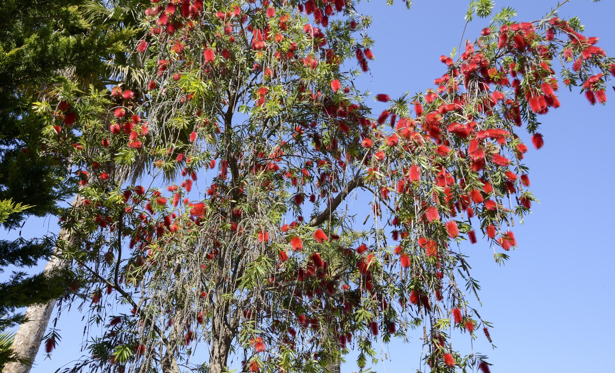 Flower tree by Jose Manuel Navarro
