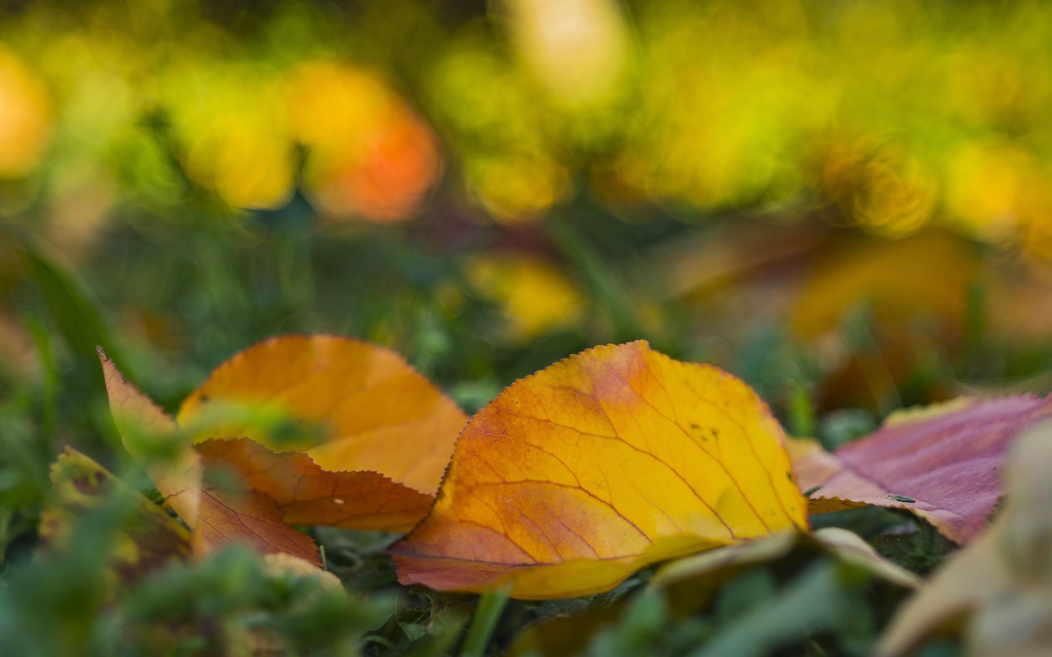 autumn by Gianni Santolin