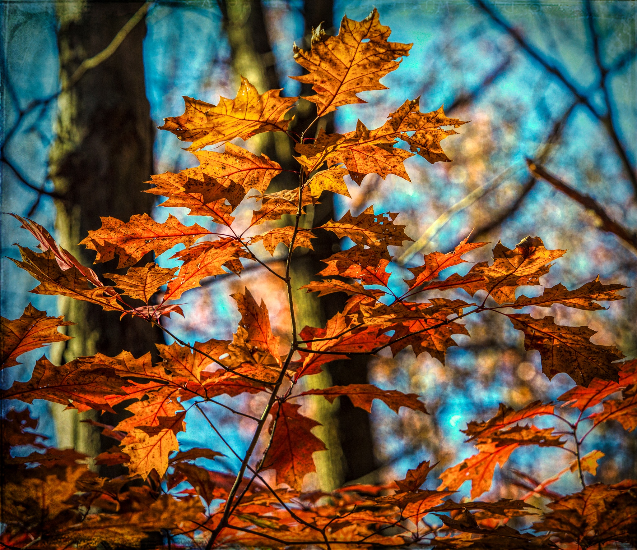 Glowing Red Leaves by John Watson