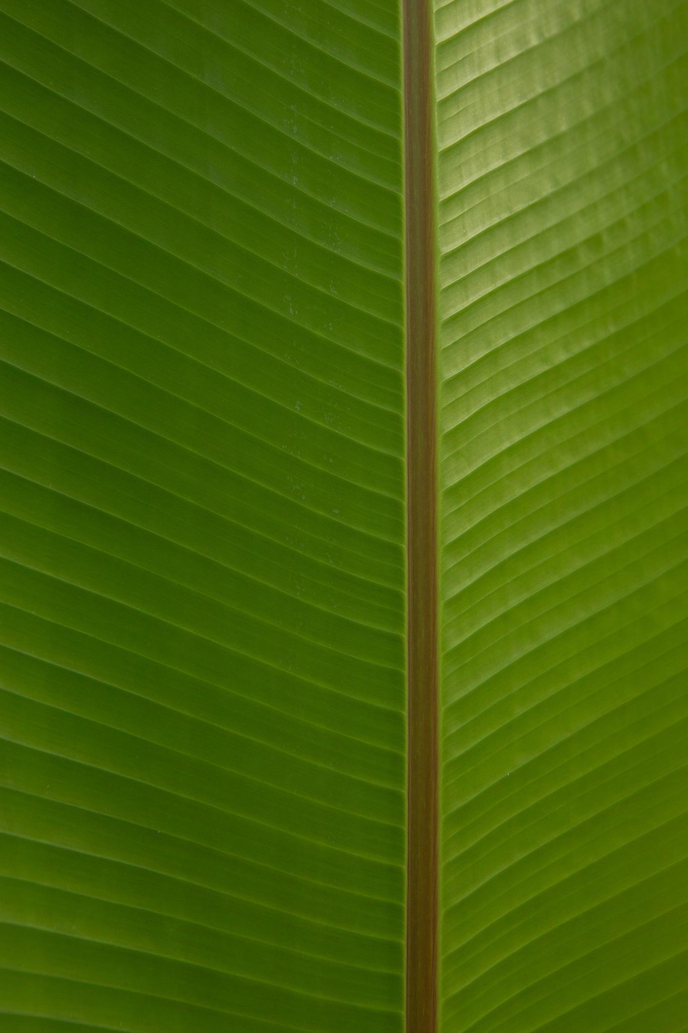 Leaf Texture by John Watson
