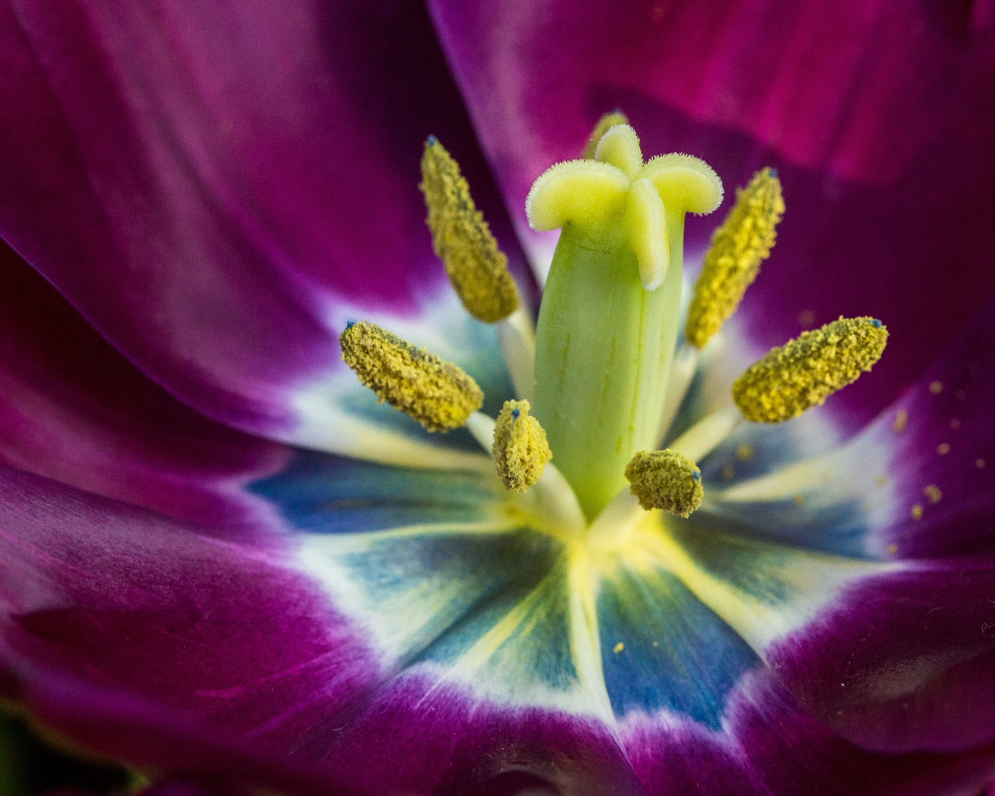 Pretty In Purple and Yellow by John Watson