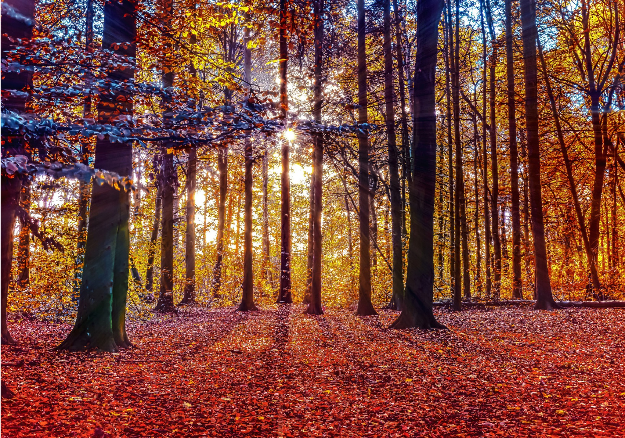 Autumn forest by piotr j