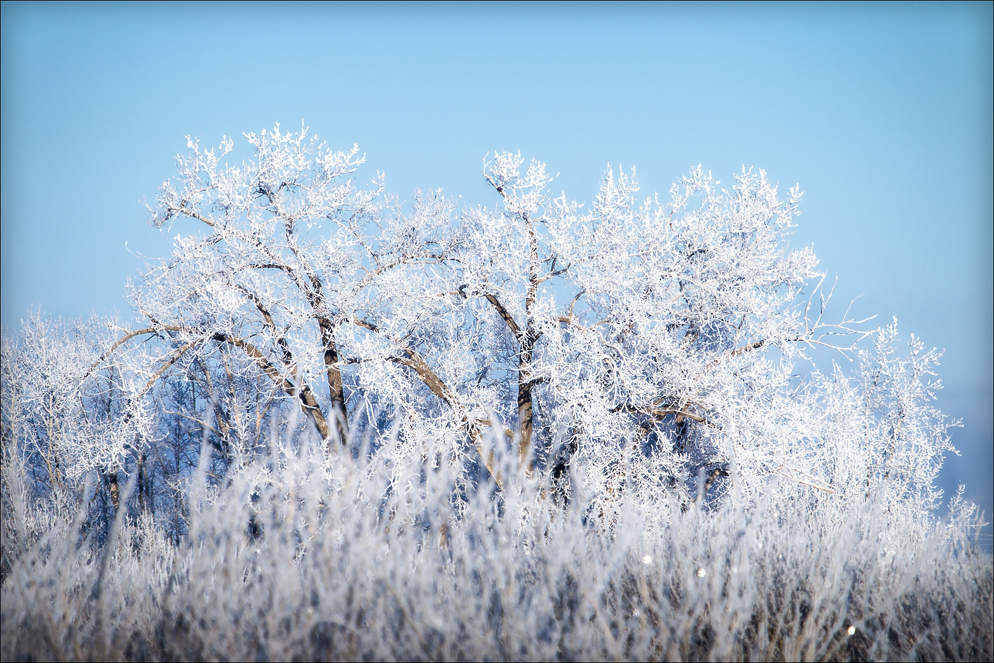 Frosty Morning by Behrfeet