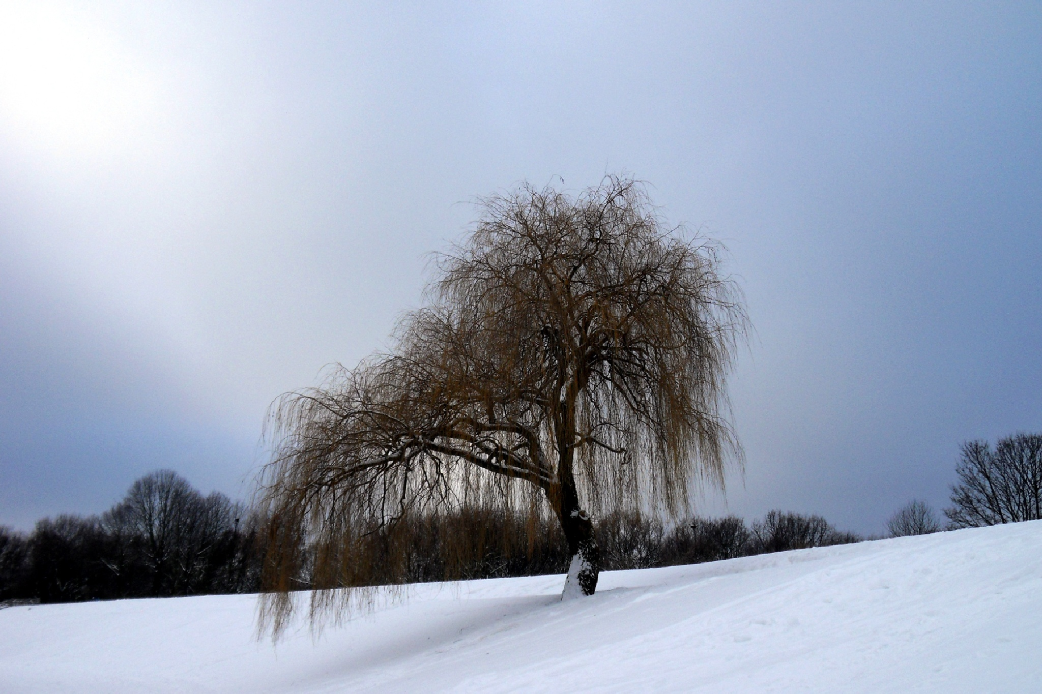 Winter tree by Barbara Bumm