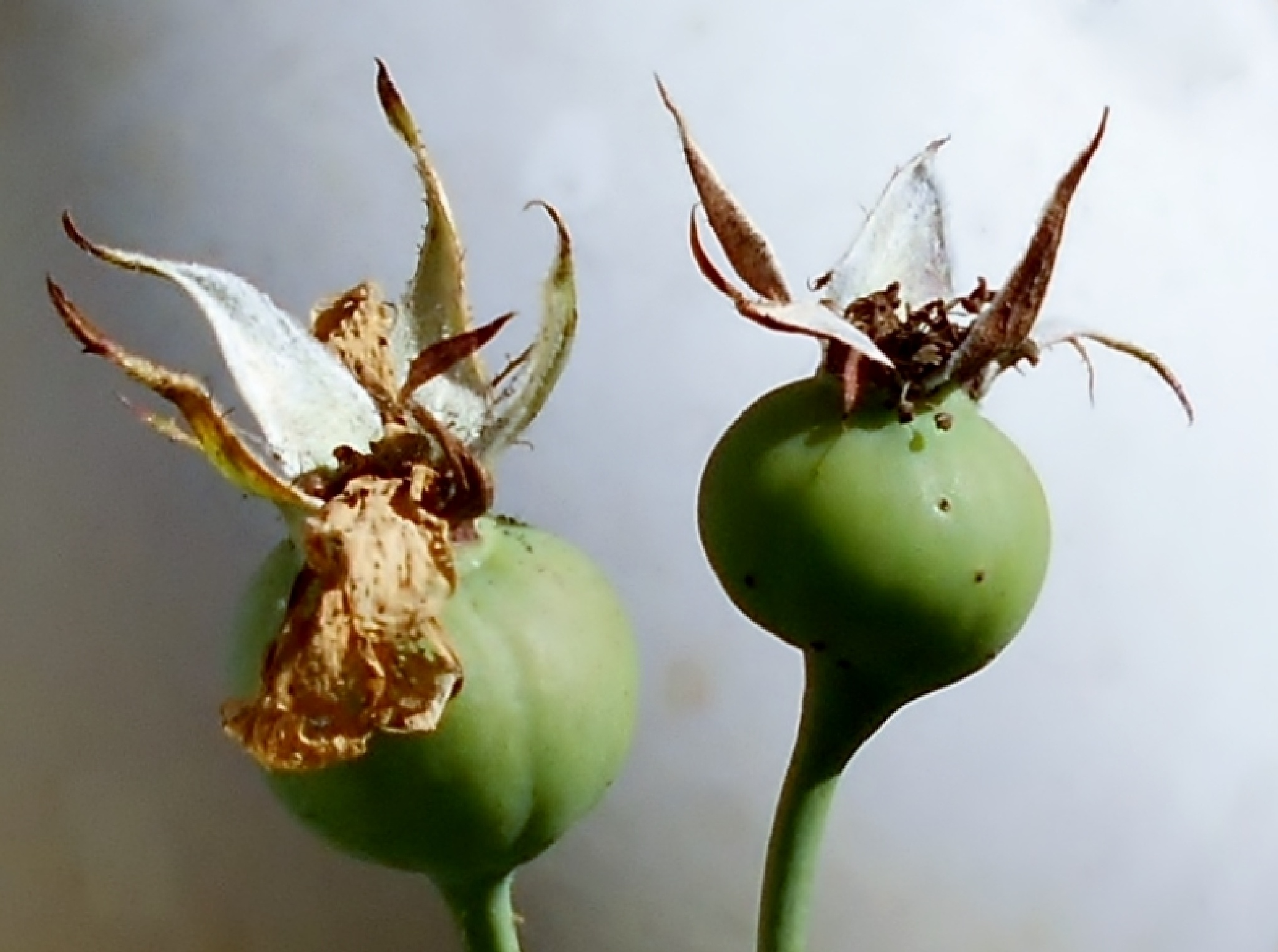 November pleasure IV by Barbara Bumm