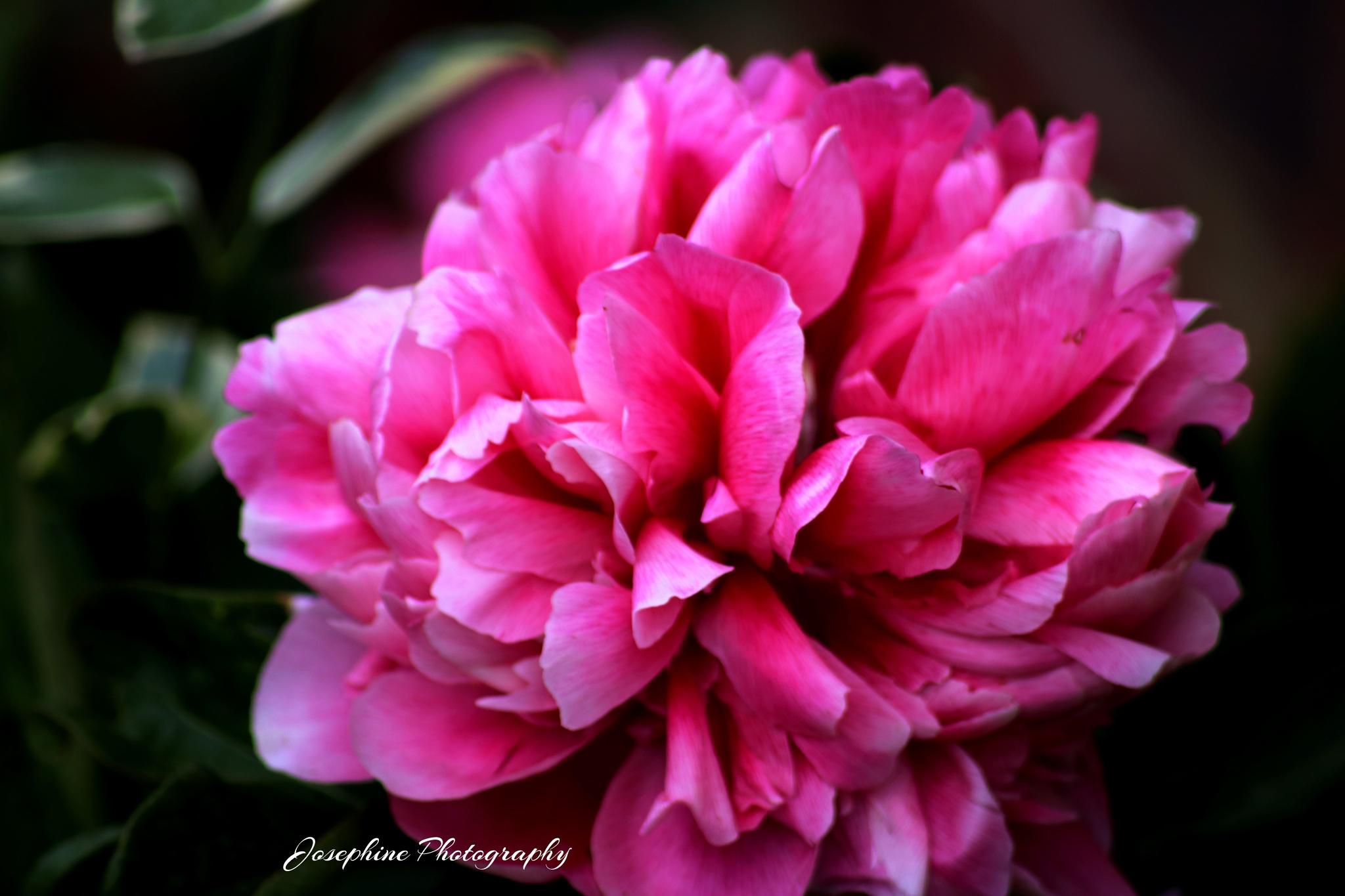 pink world  by Josephine