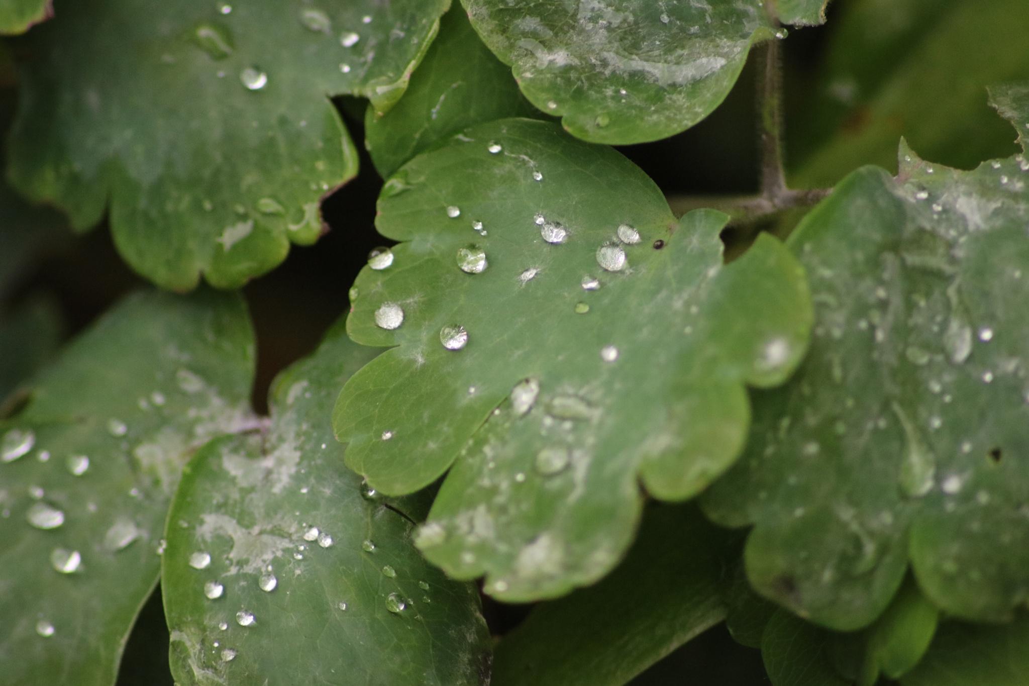 more rain drops  by Josephine