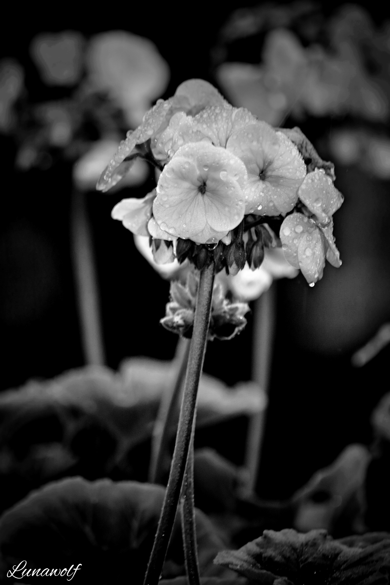 black and white 6  by Josephine