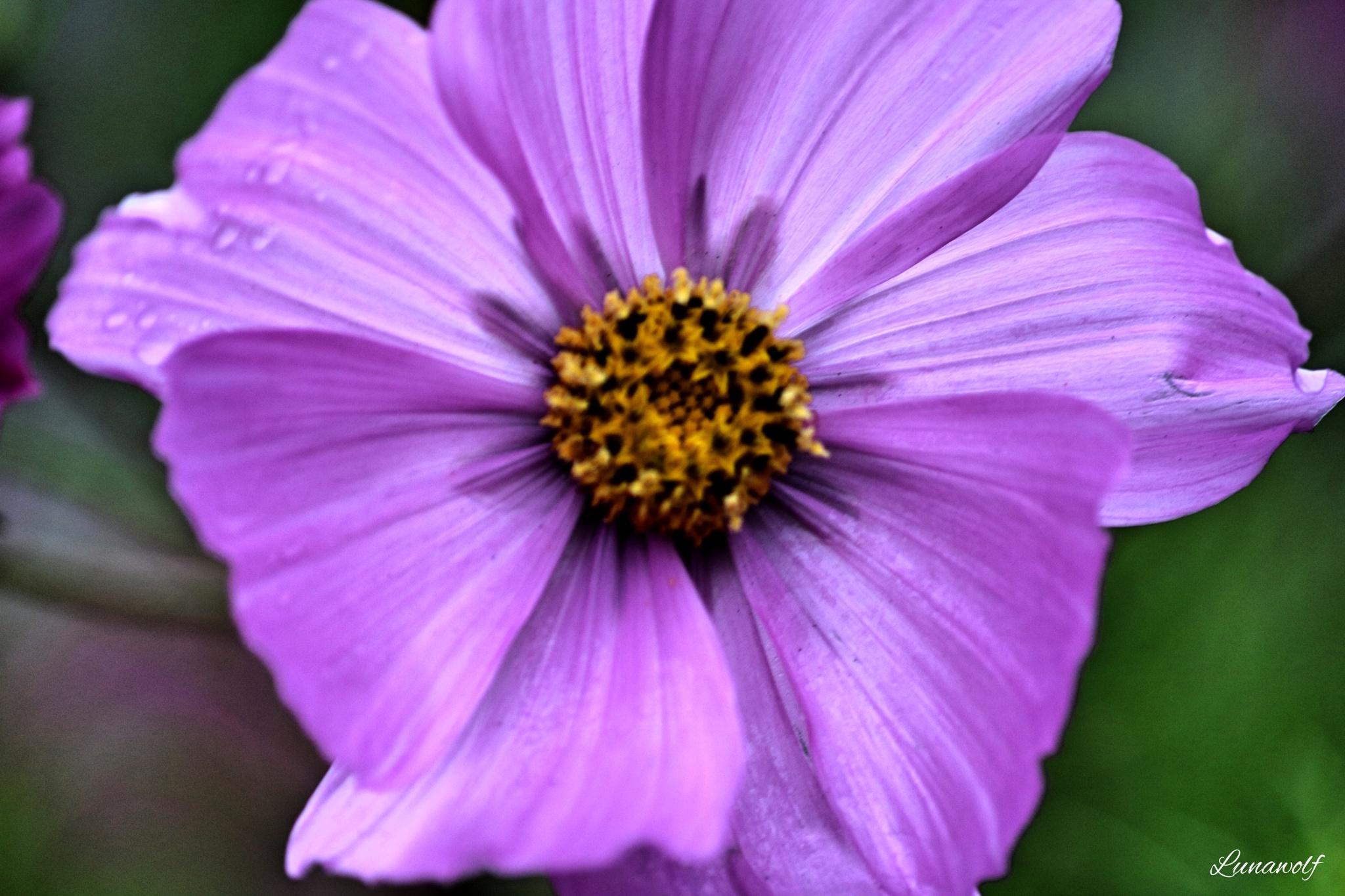 a purple flower by Josephine