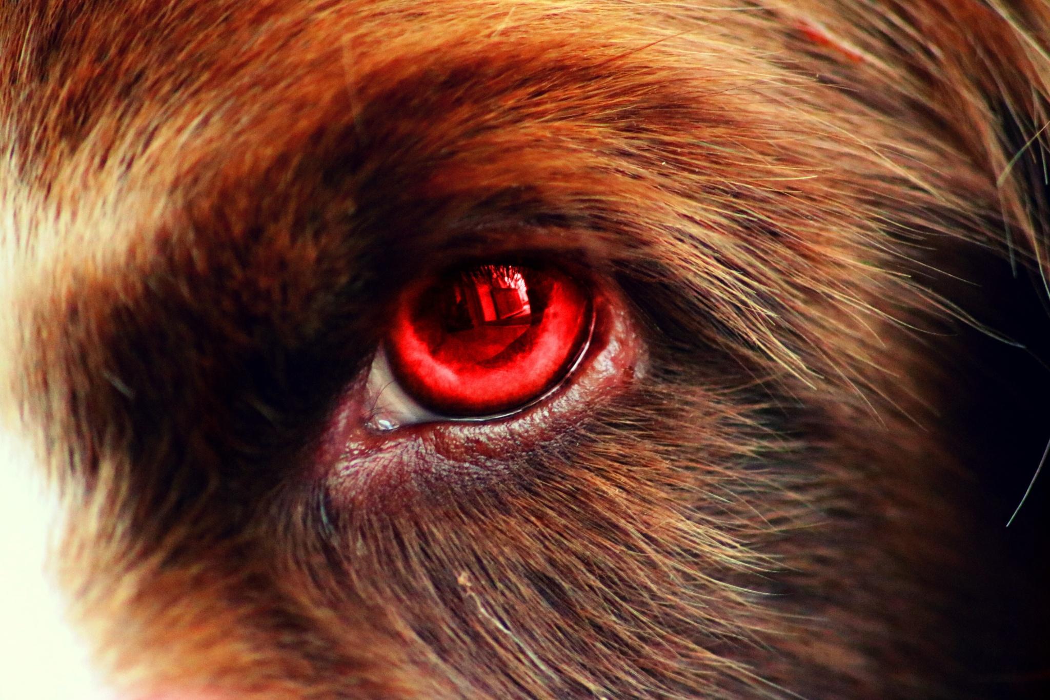 eye of a werewolf by Josephine