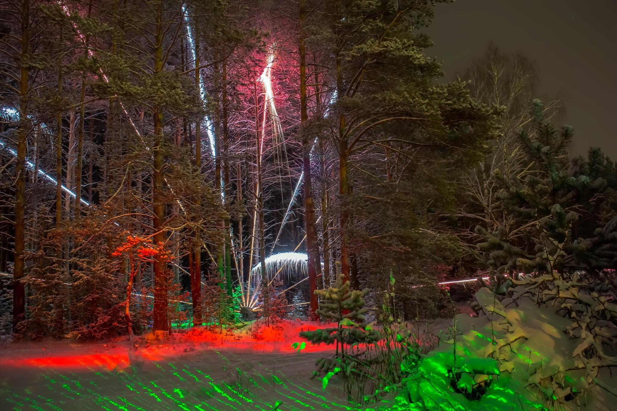 Forest phenomenon. by Nikolay Trebukhin.