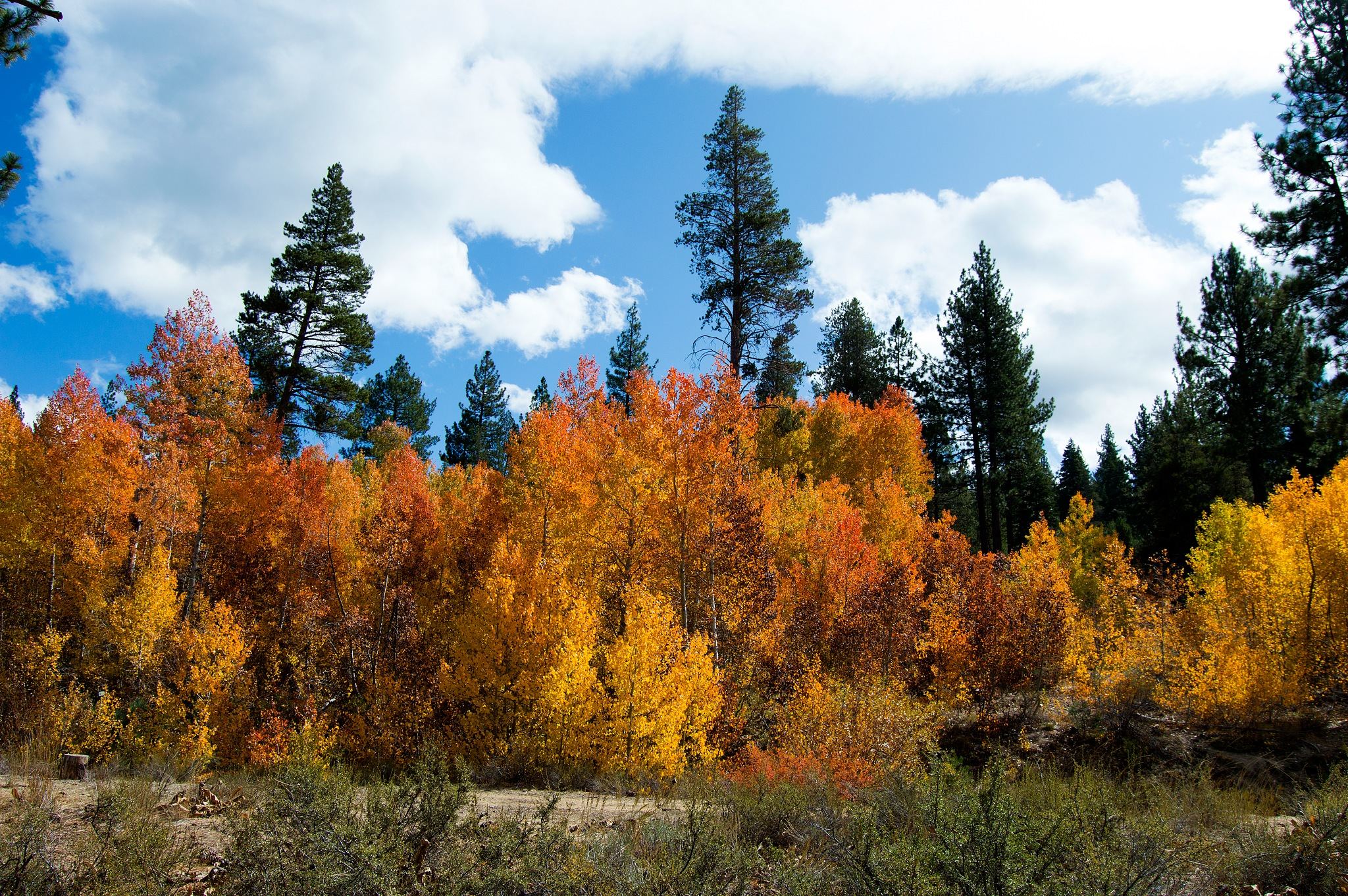 Fall color 6 by Neal Lacroix