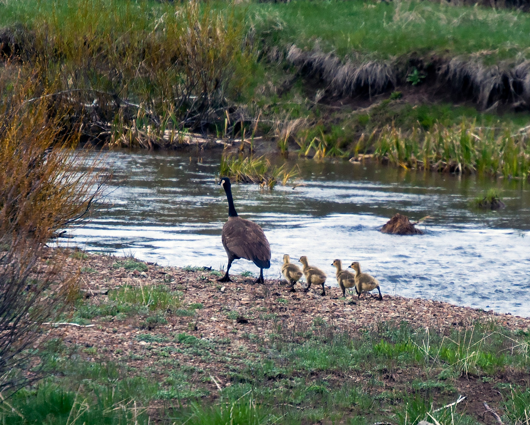 Family walk by Neal Lacroix