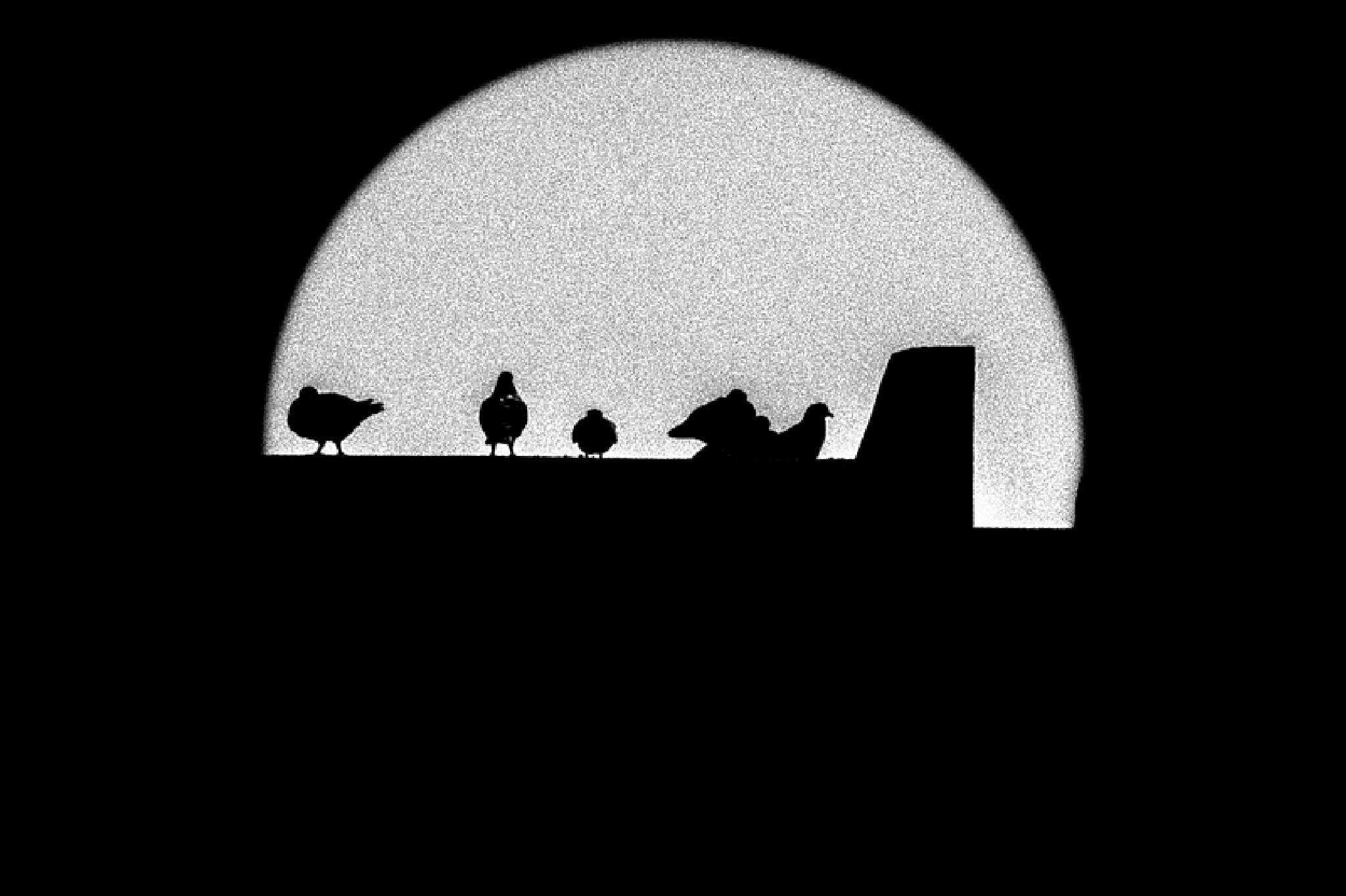 Life pigeon 1 by Djihane Benmaghsoula