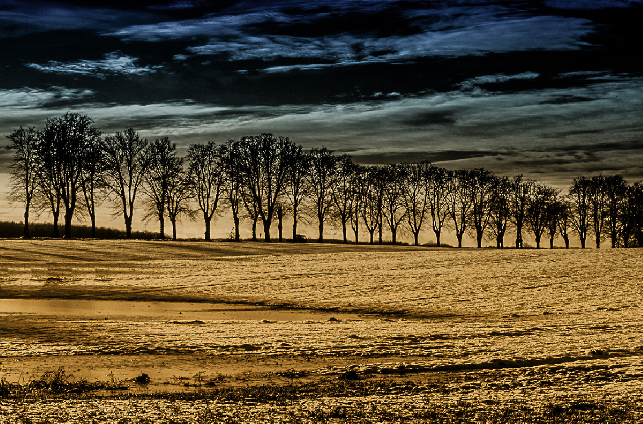 Trees by oliverpo79