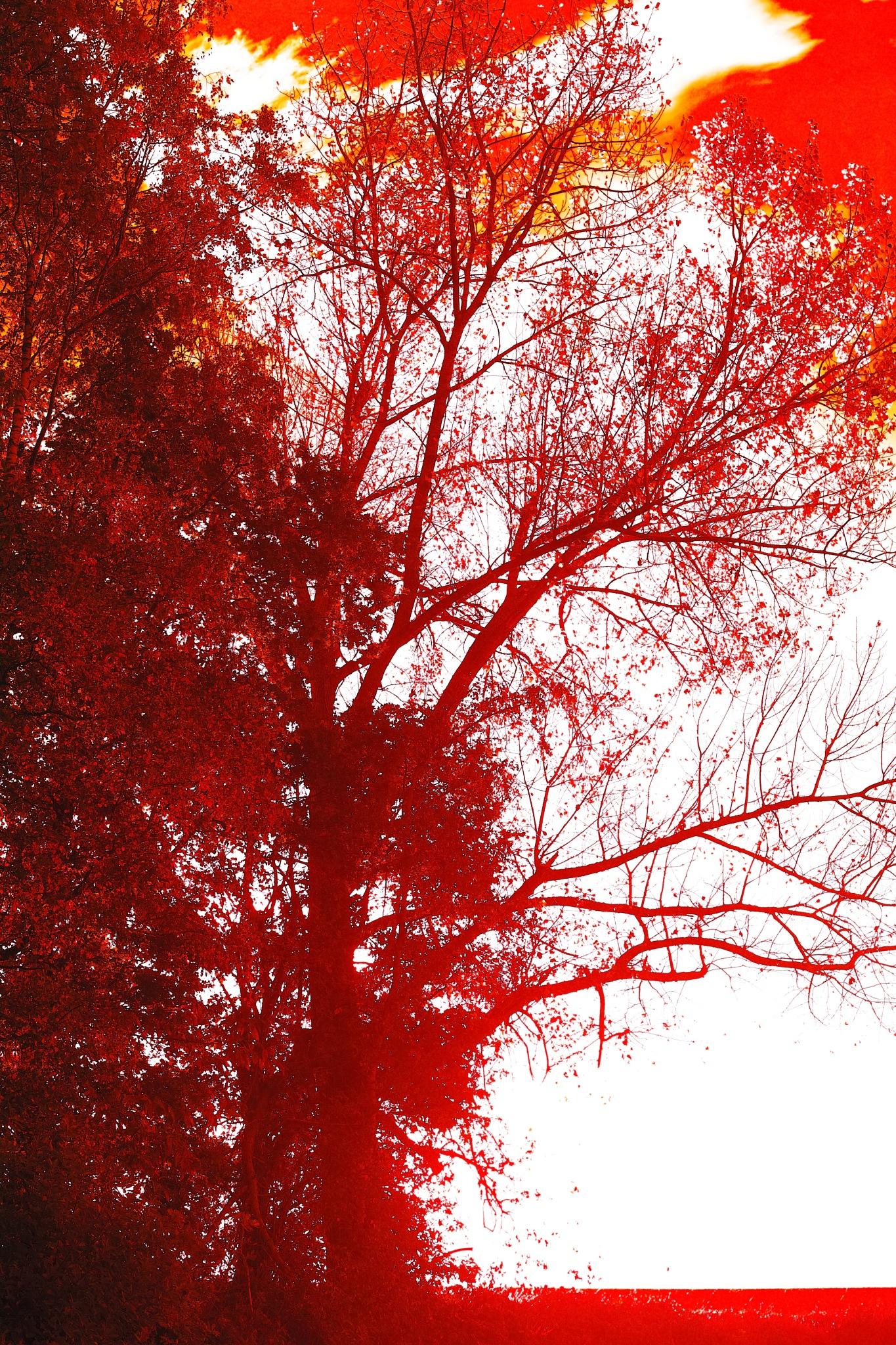 Red Three by FredWillem