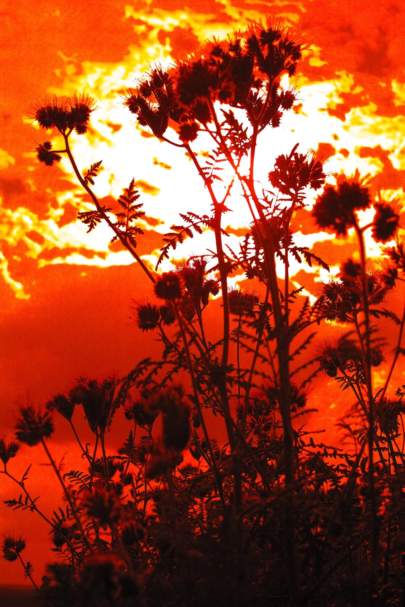 Flowers by FredWillem