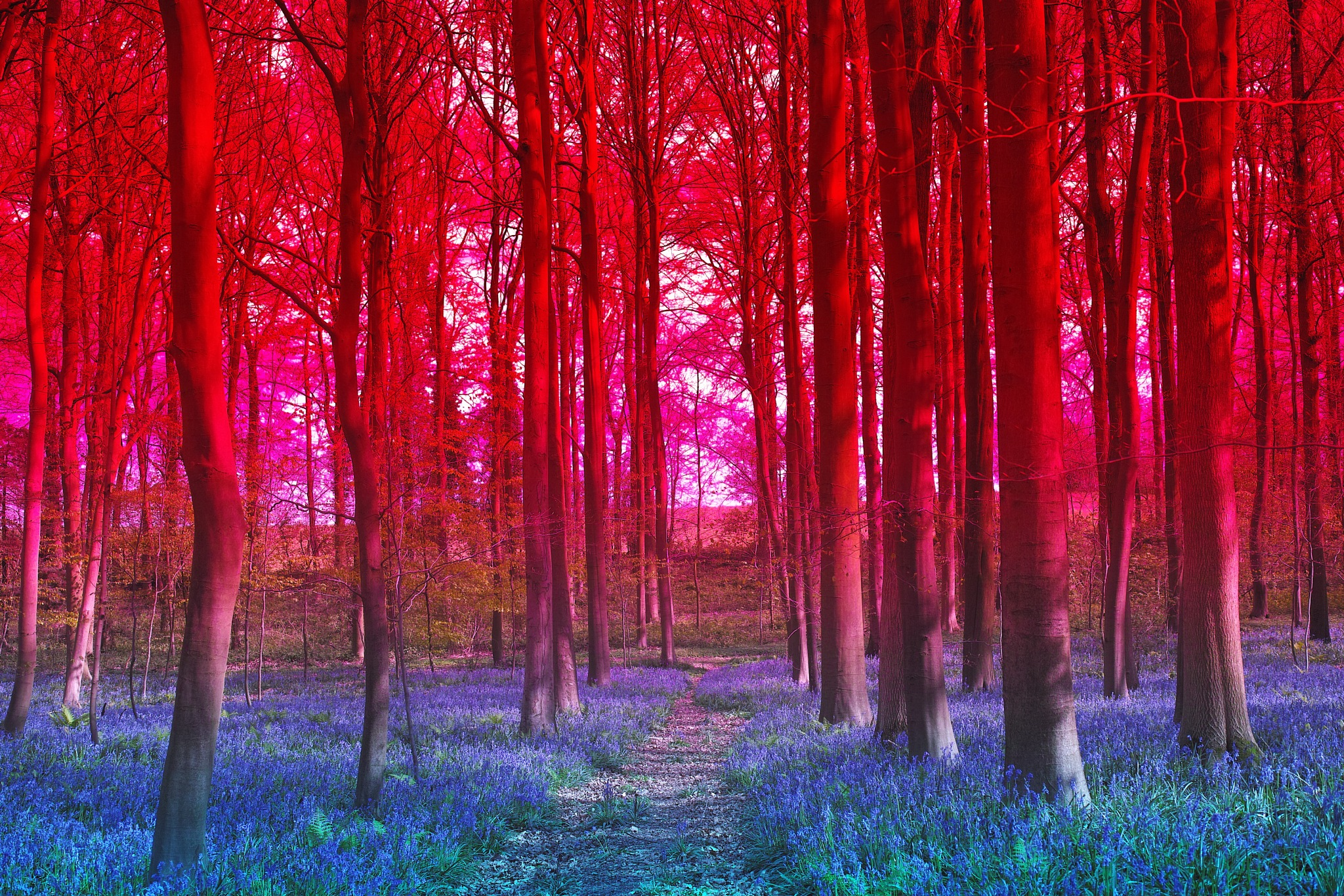 Blue red forest by FredWillem