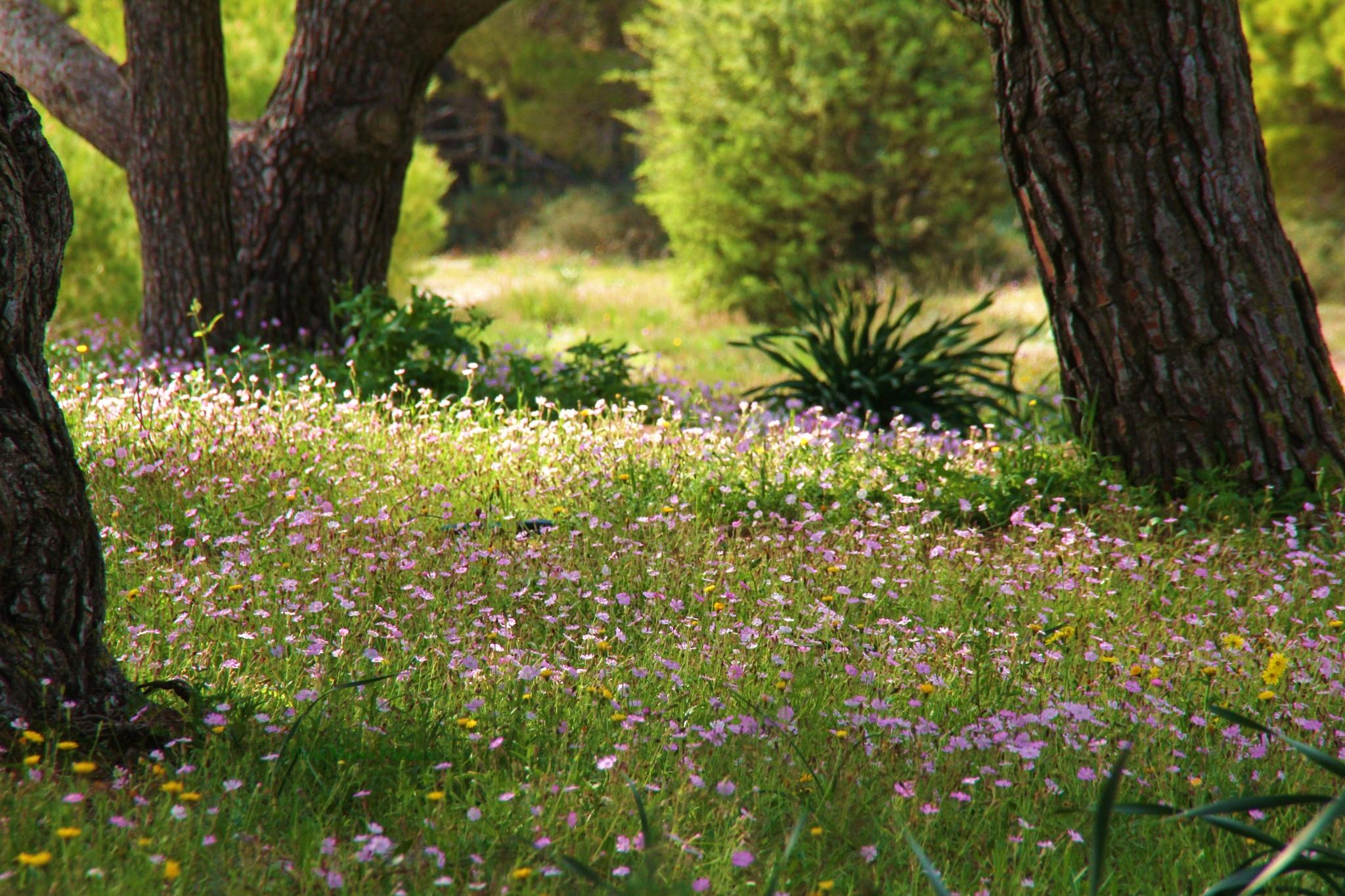 Flowery Meadow by Ilaria Mereu