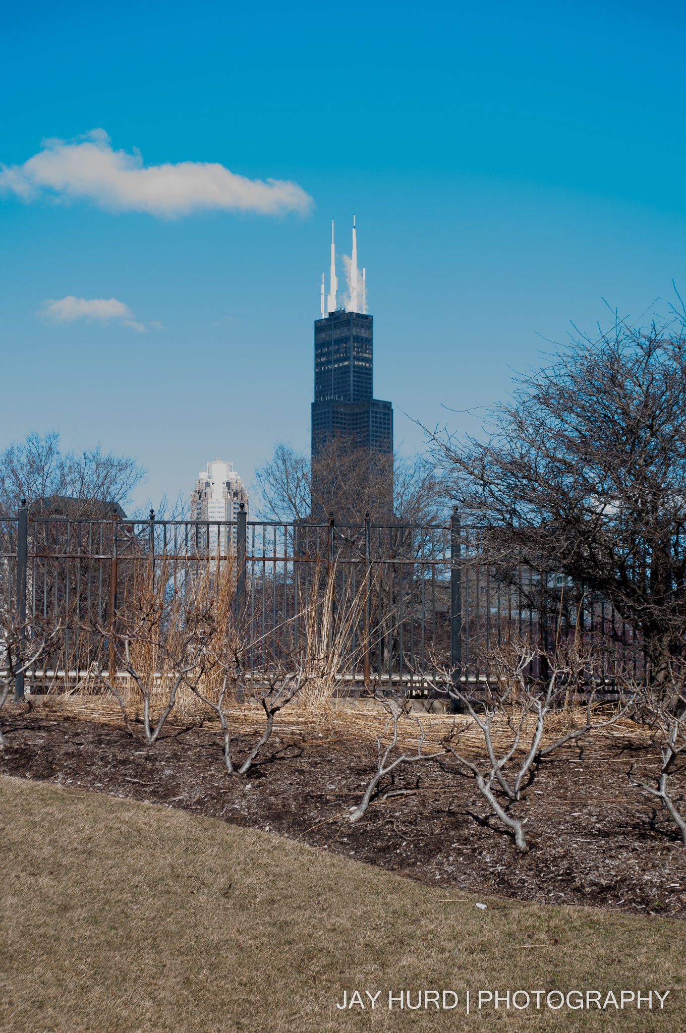 Sears Tower by Jay Hurd