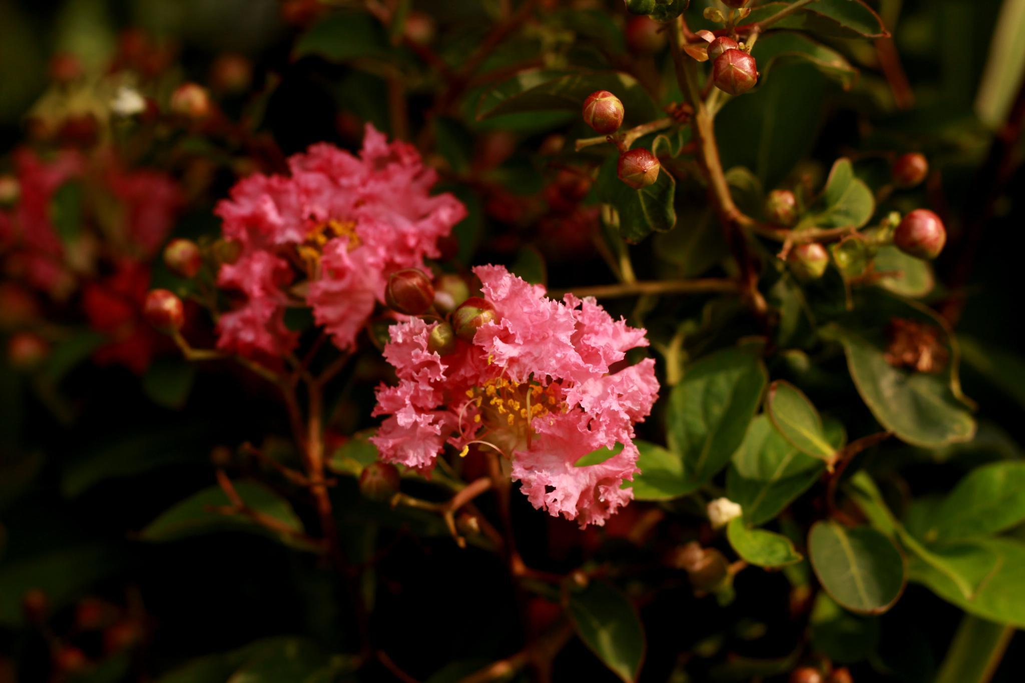 Flower by Isa Shukran