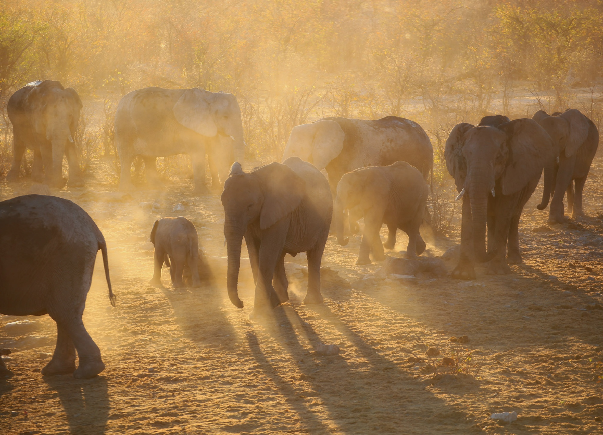 Dusty elephant sunset by Kjersti Holmang