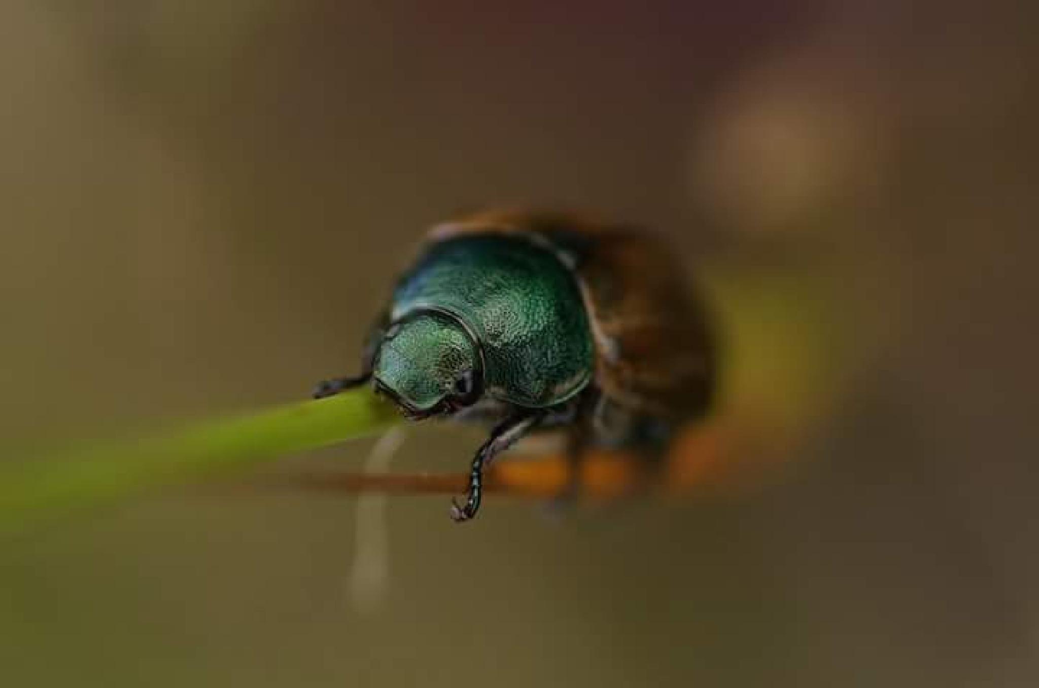Insect by Matsje70