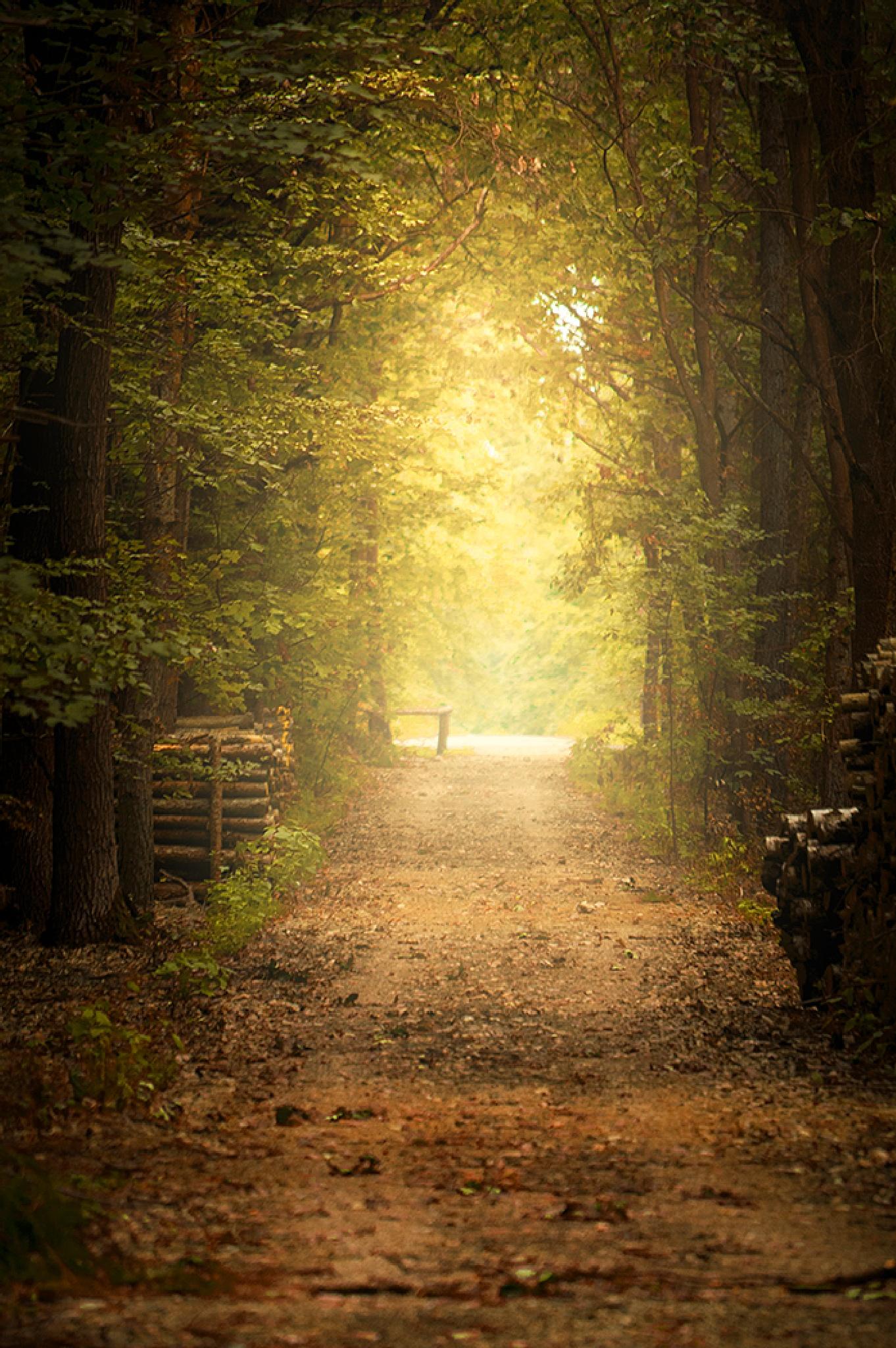 misty  by jacula