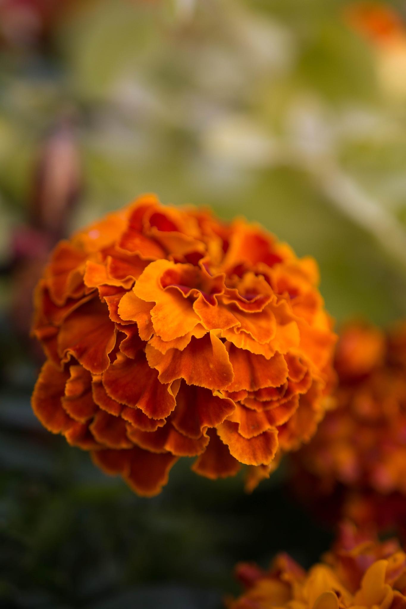 Soft orange by Fia Lagerdahl