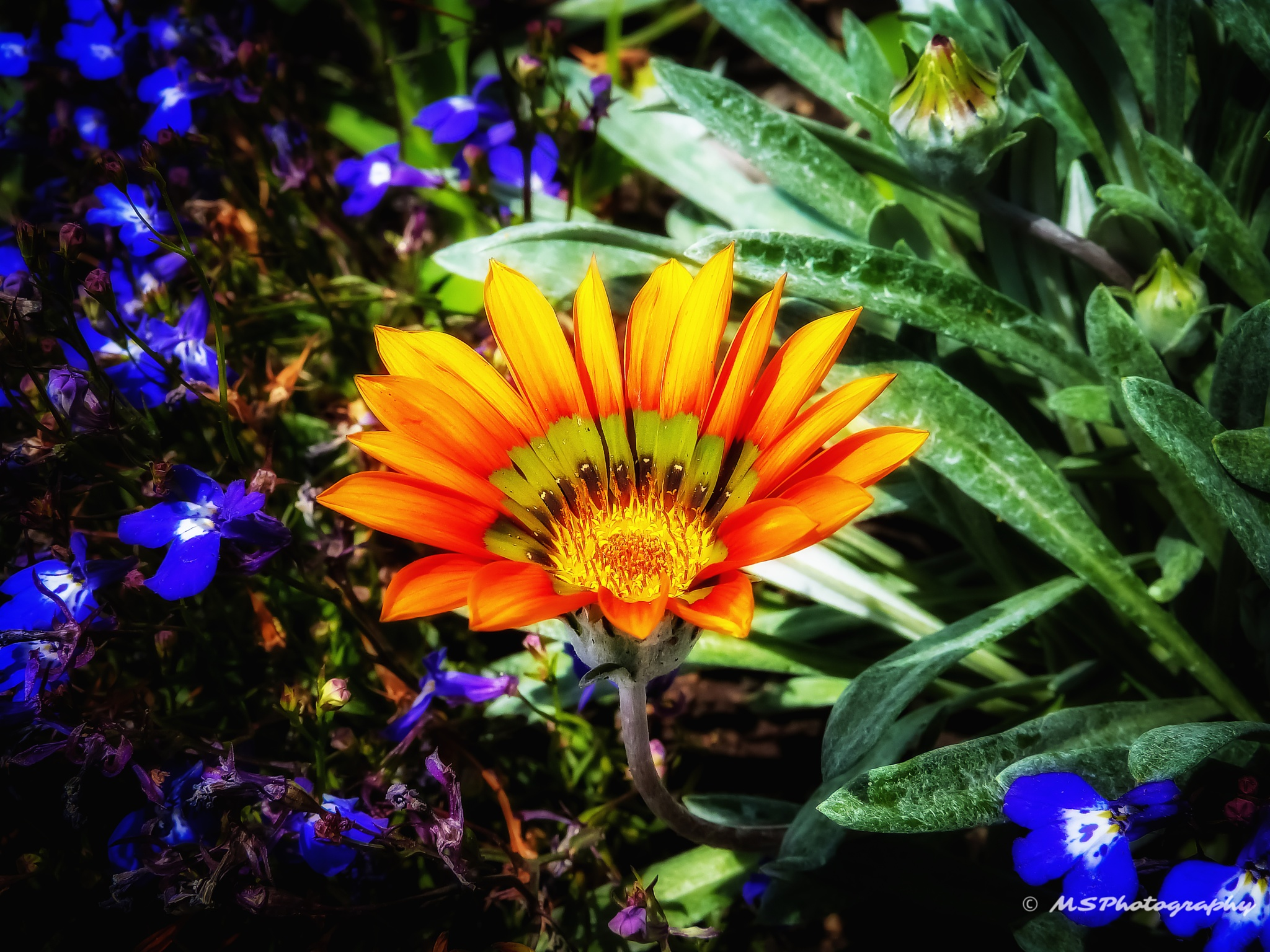 Botanic Garden by Martin Schunack