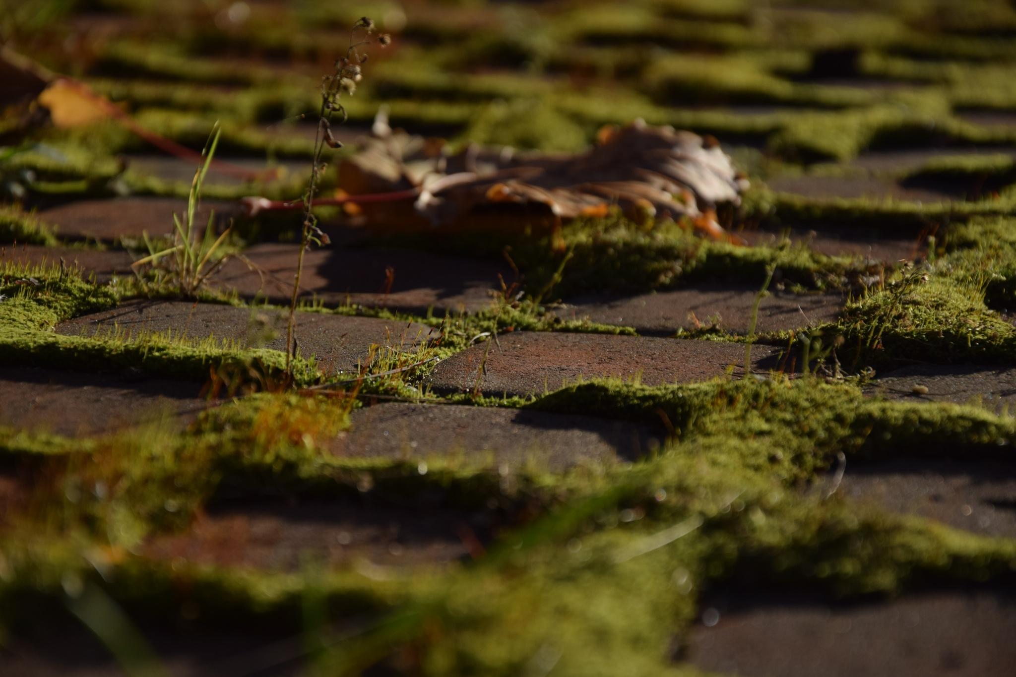 Green road by Ingrid_M