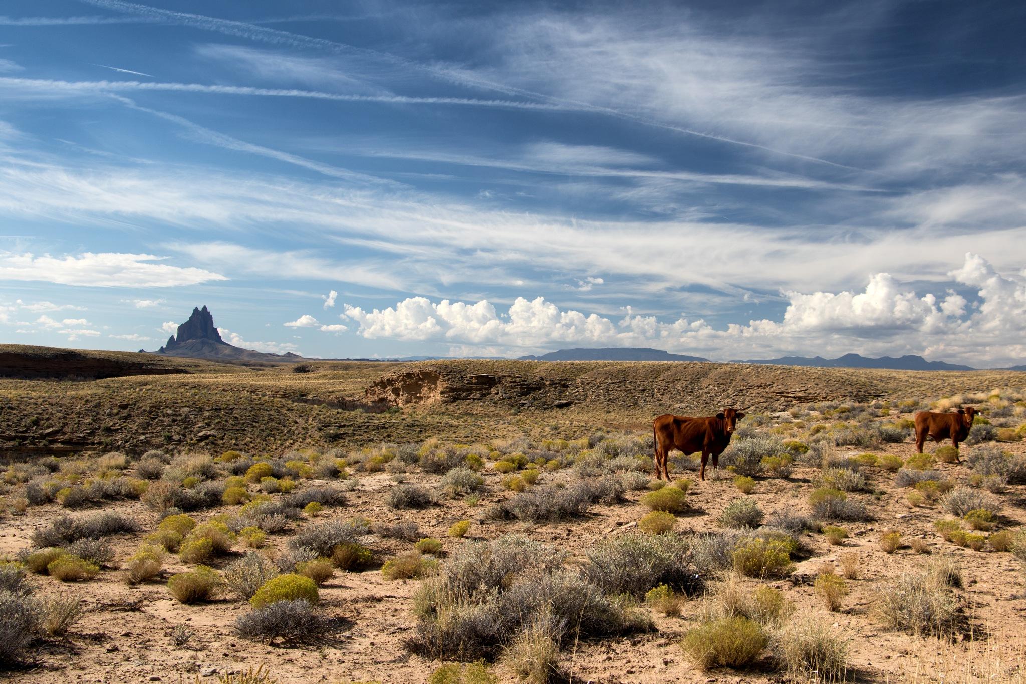 Shiprock - New Mexico-4 by Benjamin Hernandez