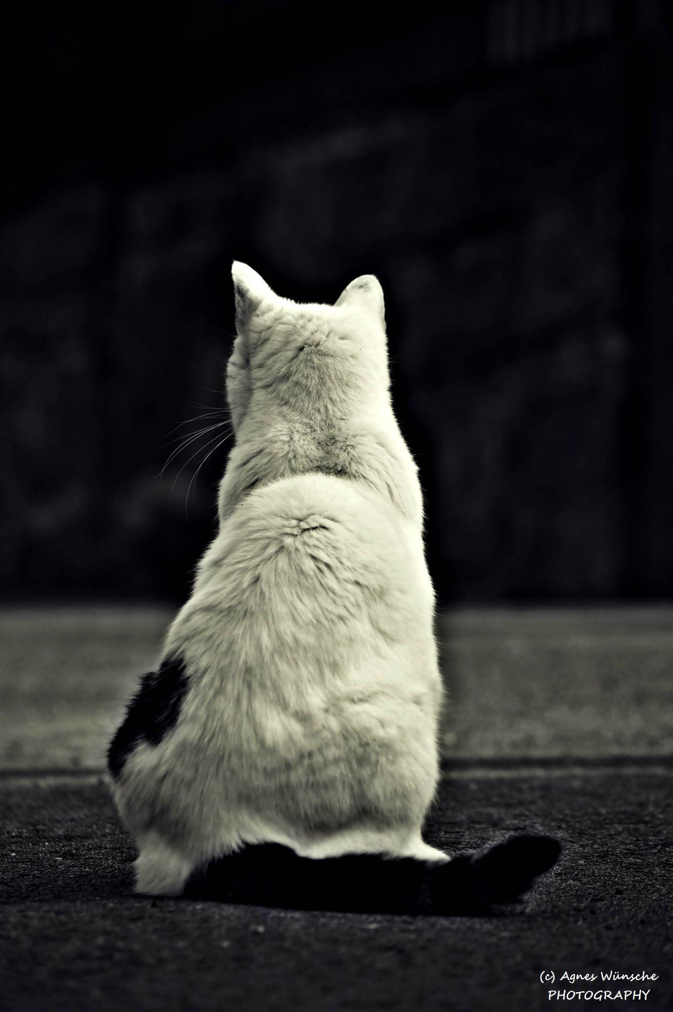 Cat by agneswuensche