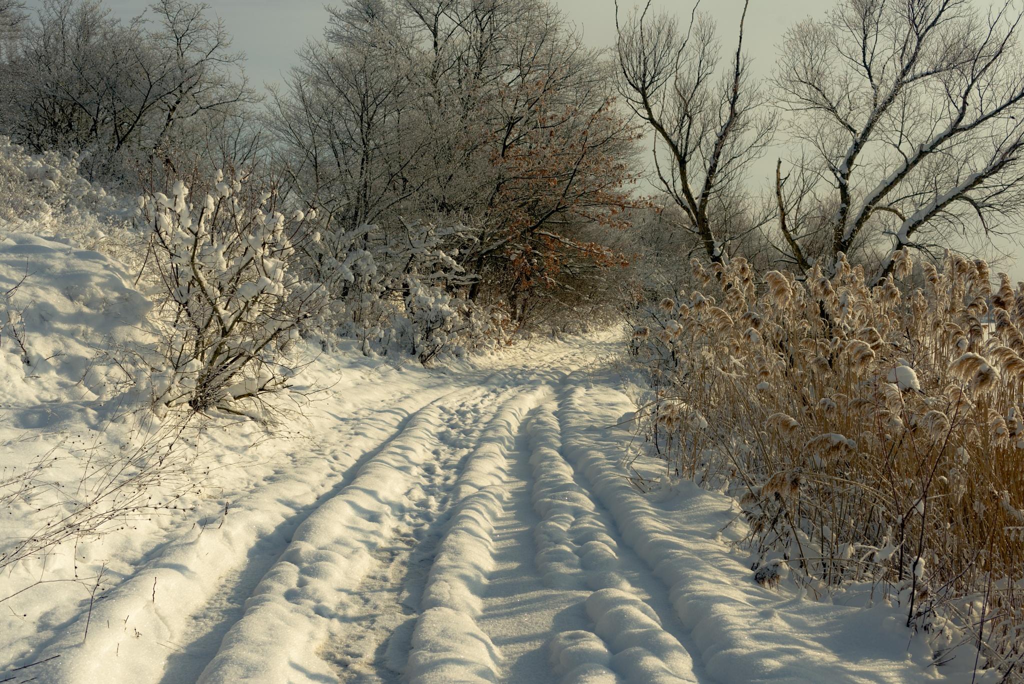 Зимняя дорога by Alexander Plekhanov