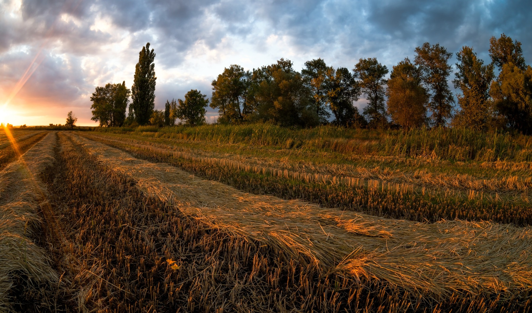 Autumn by Alexander Plekhanov
