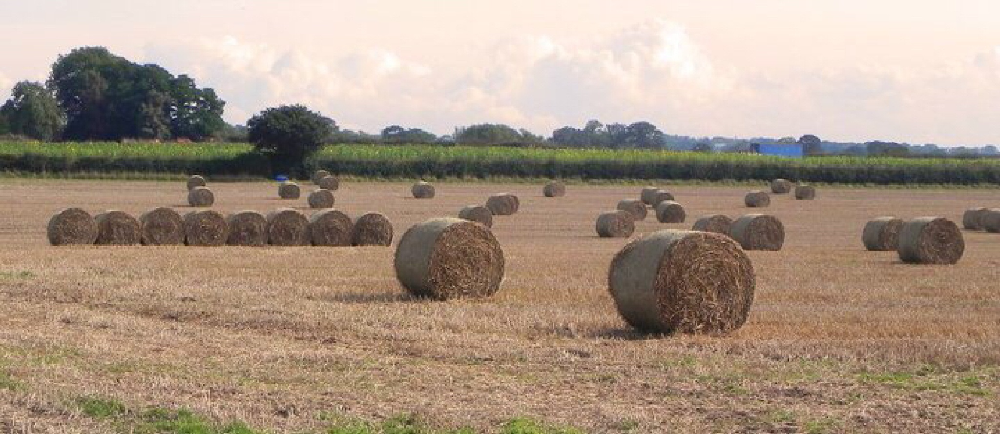 Harvest time by Peter Stowell