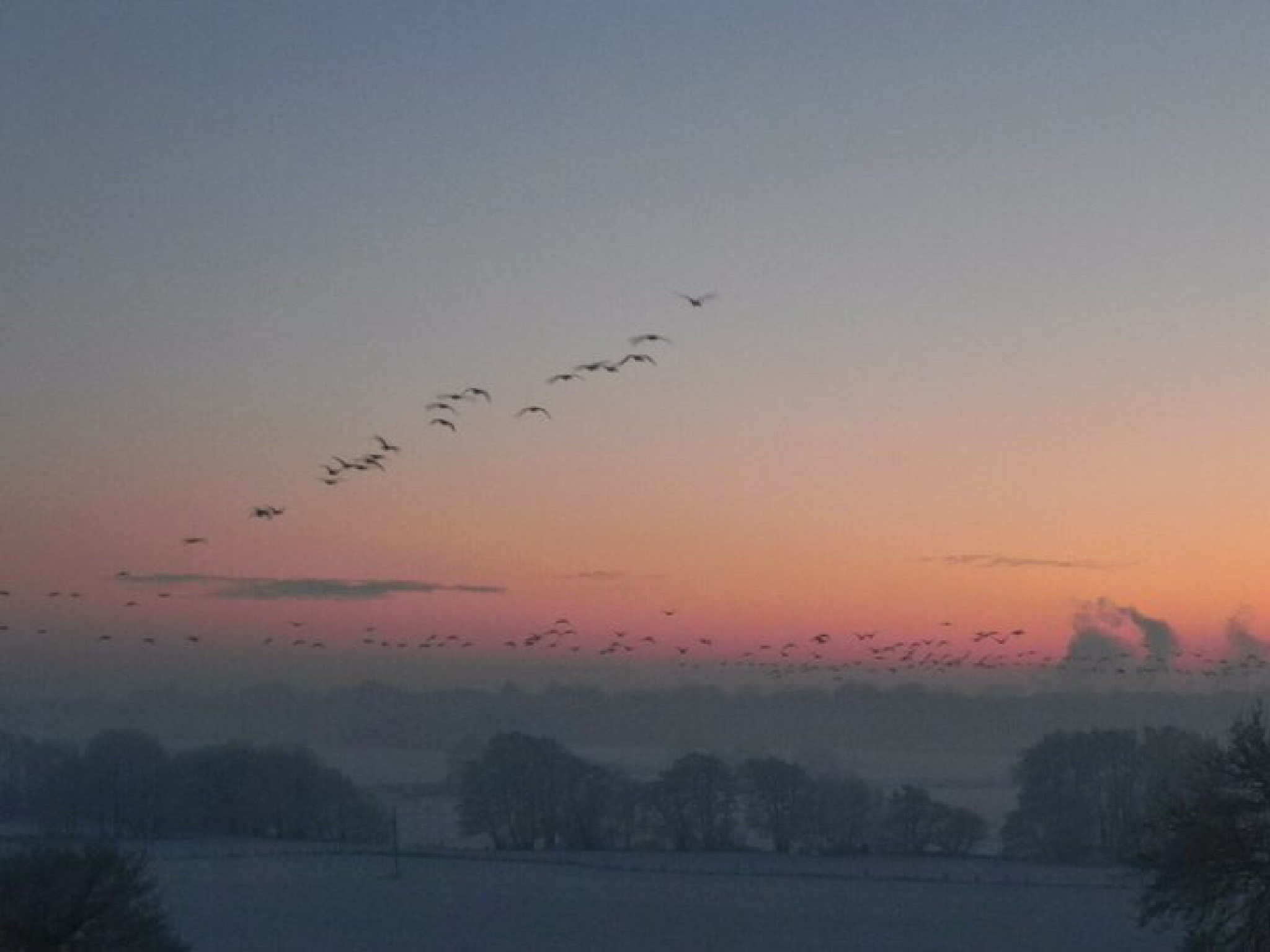 Autumn migration of geese over Marbury mere by Peter Stowell