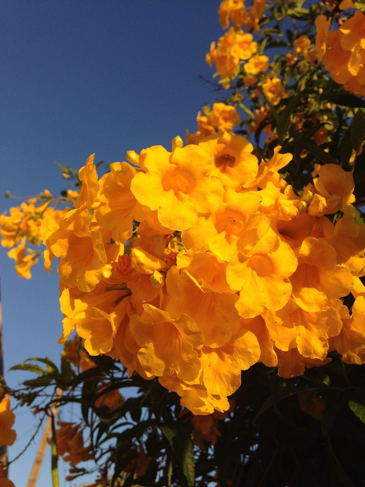 Flores  by Adriana Silva Bruns