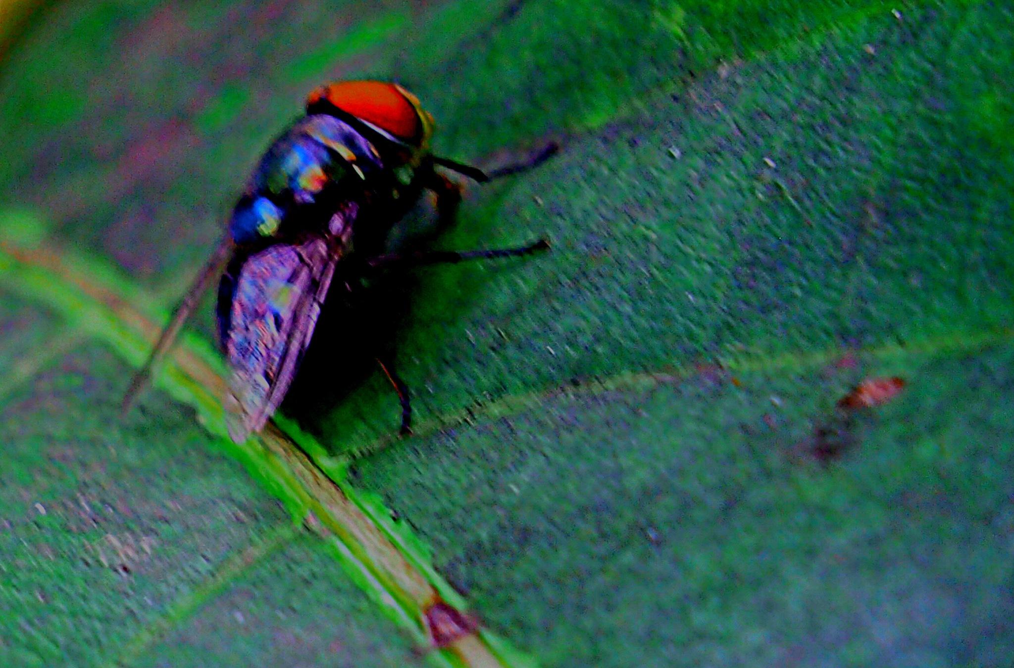 The Fly! by Rudy Tarrazona Guacena