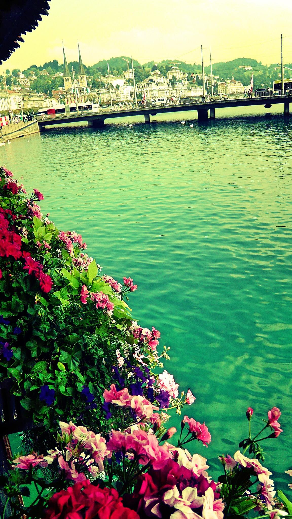 The flowers of Luzern by Rudy Tarrazona Guacena